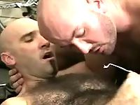 Bear gays jizz by turns on hairy belly